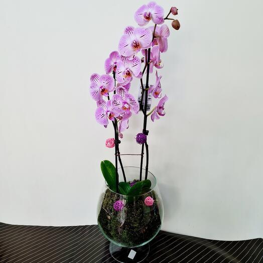 Орхидея в оформлении цвет микс