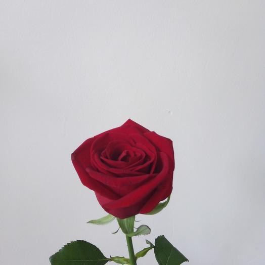 Роза Рэд Наоми