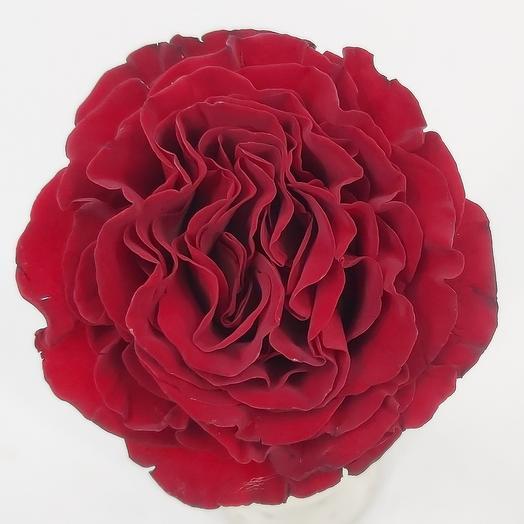 Rose Hearts 50cm