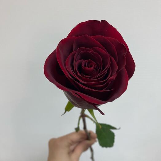 Роза ( Эквадор) 80 см