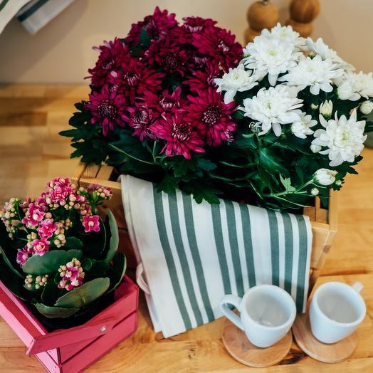 Хризантема Грандесса: букеты цветов на заказ Flowwow