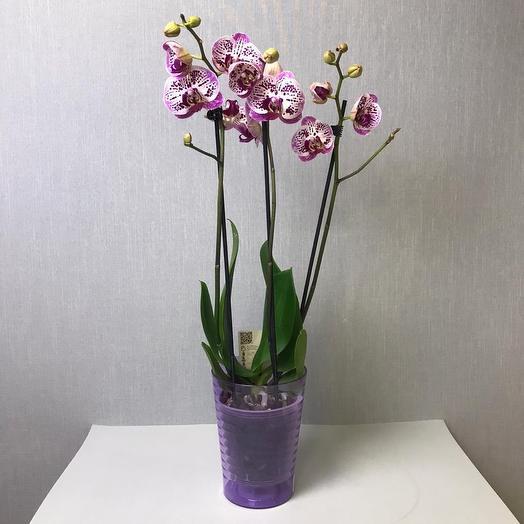 Орхидея в кашпо: букеты цветов на заказ Flowwow