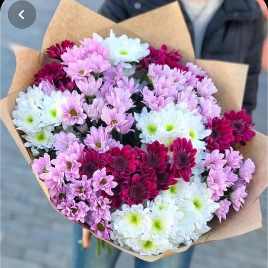 Букет 17 красивых свежих хризантем кустовых