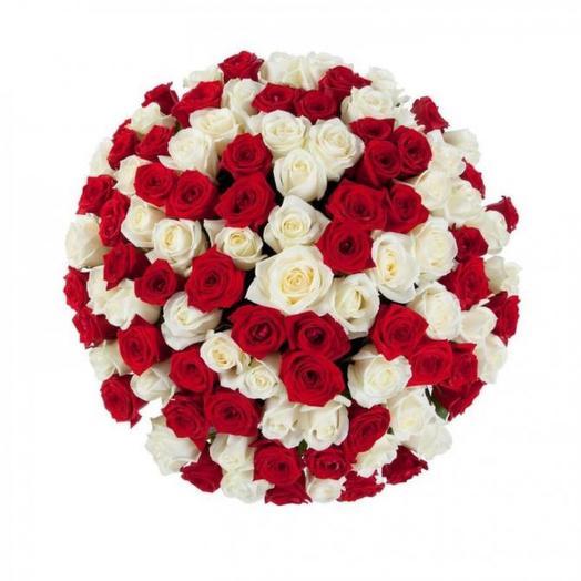 Красно-белая Роза 101