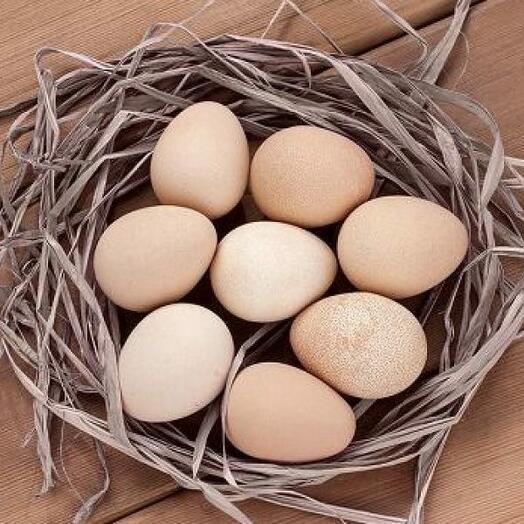 Яйцо цесариное 10шт - в упаковке