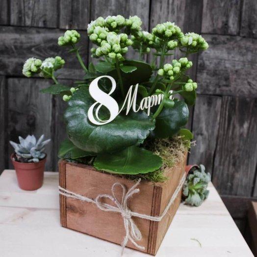 Горшечные растения 2611: букеты цветов на заказ Flowwow