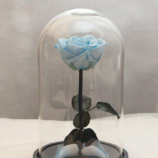 Роза в колбе RozaRose Медиум Голубая