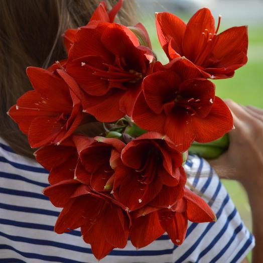 Красные амариллисы: букеты цветов на заказ Flowwow