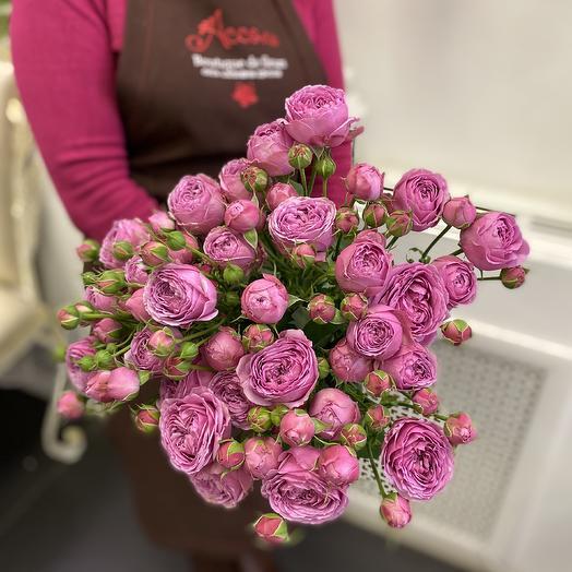 Пионовидные розы Мисти баблз