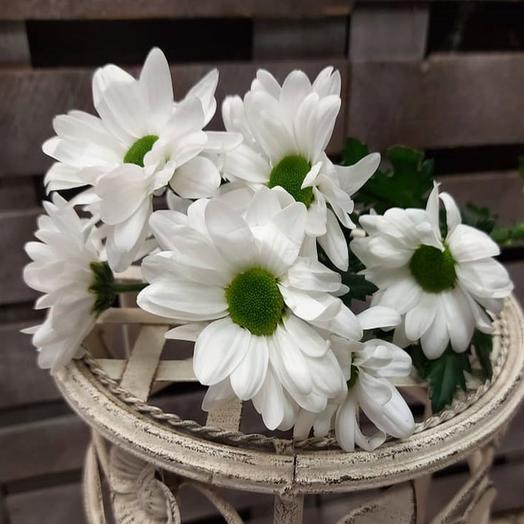 Хризантема Кустовая Бакарди белая поштучно