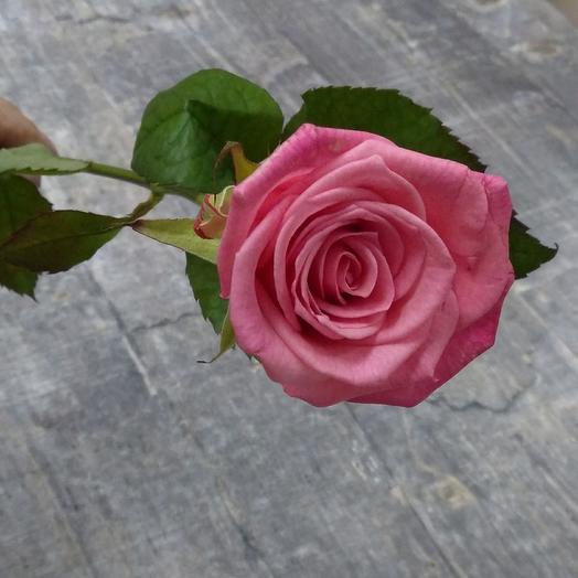 Rosa Casanova