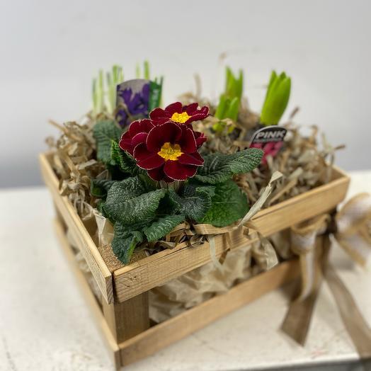 Ящик с первоцветами 1