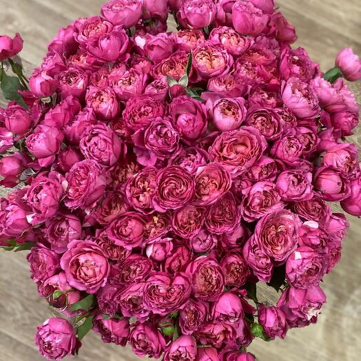 Роза пион