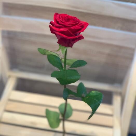 Роза красная 80см