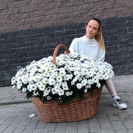 Ромашковое поле: букеты цветов на заказ Flowwow
