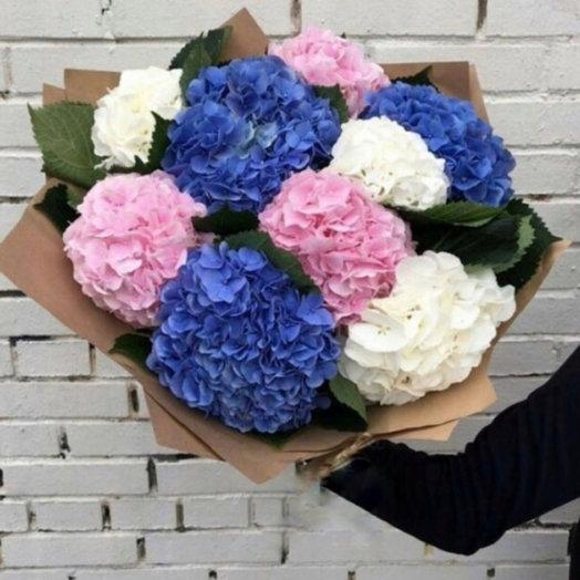 Букет из 9 разноцветных Гортензий: букеты цветов на заказ Flowwow