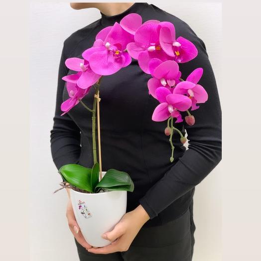 Орхидея Фуксия: букеты цветов на заказ Flowwow