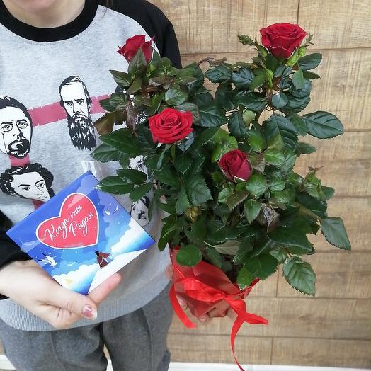 Роза с шоколадной открыткой на День Влюблённых: букеты цветов на заказ Flowwow