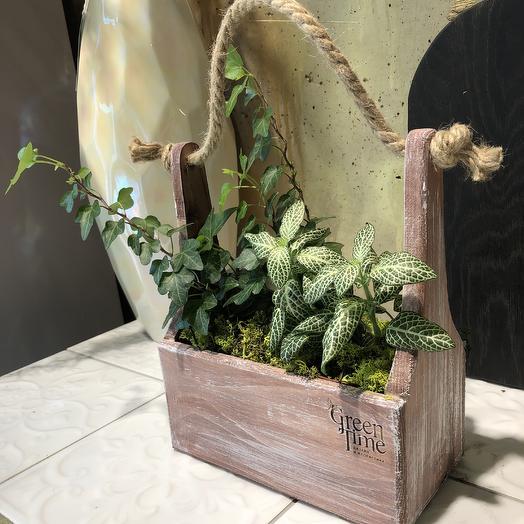 Мини-сад: букеты цветов на заказ Flowwow