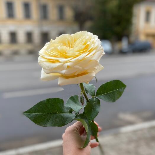 Пионовидная Роза Candlelight