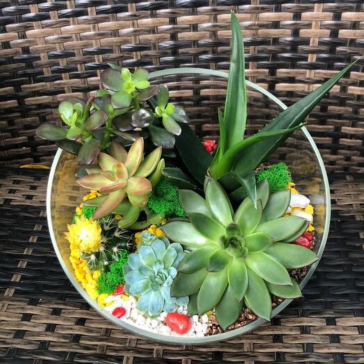 New! Большой и красочный флорариум с денежным деревом и сукулентами