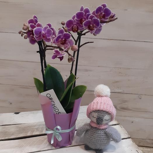 Необыкновенная коллекционная орхидея с игрушкой ручной работы: букеты цветов на заказ Flowwow