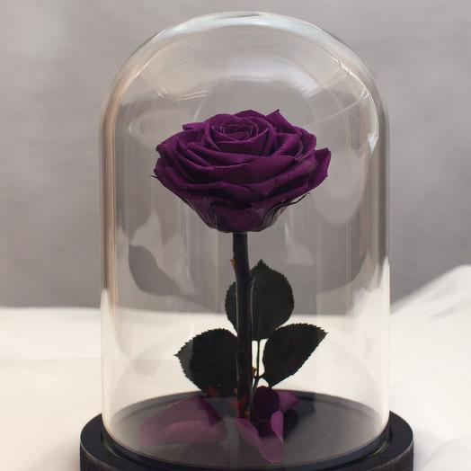 Роза в колбе RozaRose Мини Фиолетовая: букеты цветов на заказ Flowwow