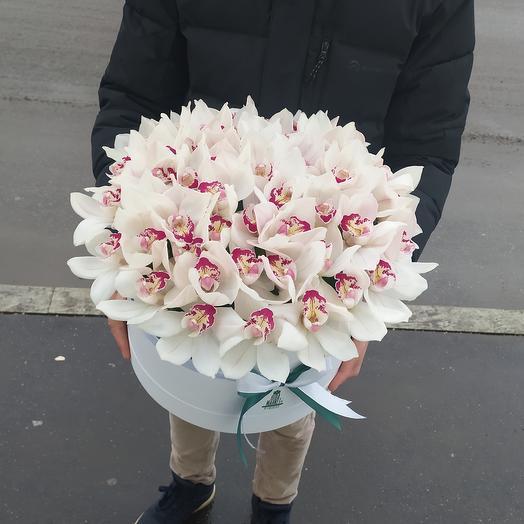 51 белая Орхидея в Коробке