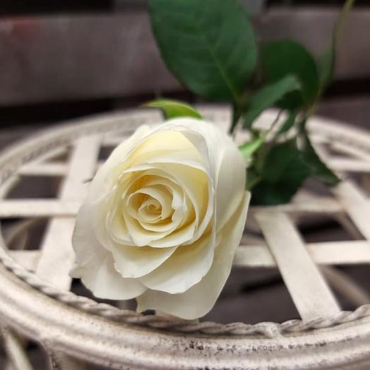 Розы белые 45 см поштучно