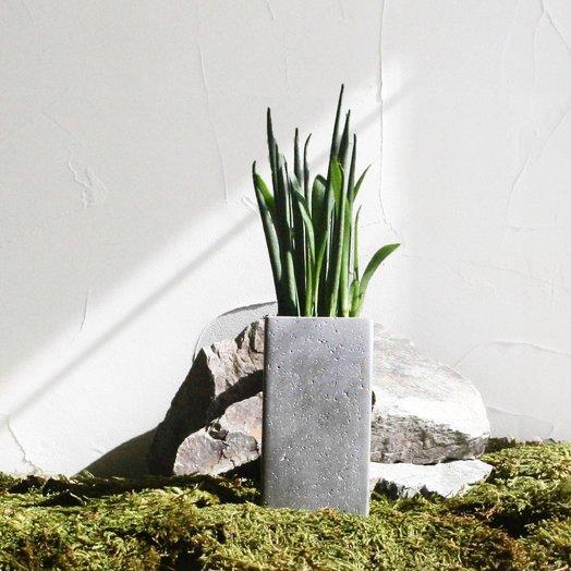 Бетонное кашпо с растением GREY SANSA