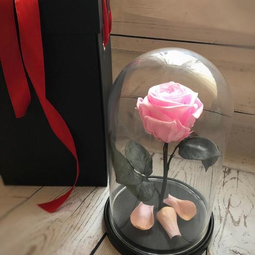Жива розовая роза в колбе: букеты цветов на заказ Flowwow