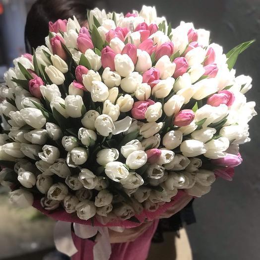 Tulips 301