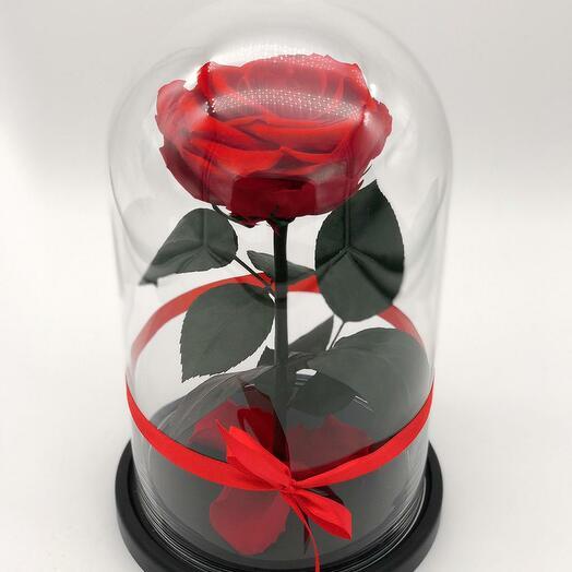Роза King Красная