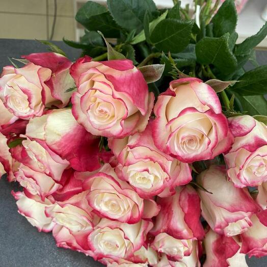 Розы бело-розовые