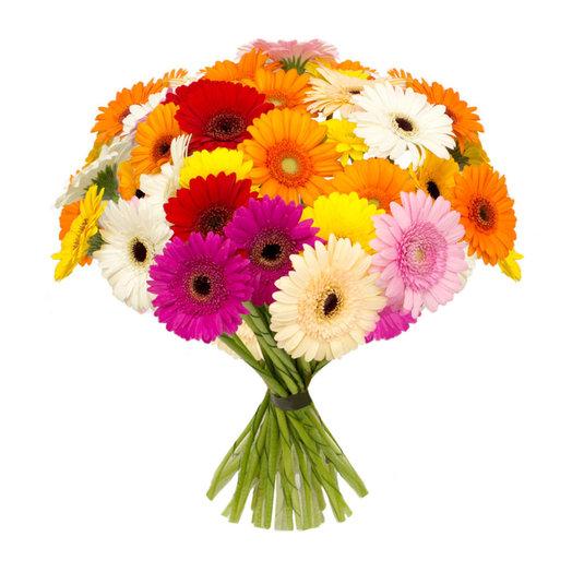 Герберы мини микс: букеты цветов на заказ Flowwow