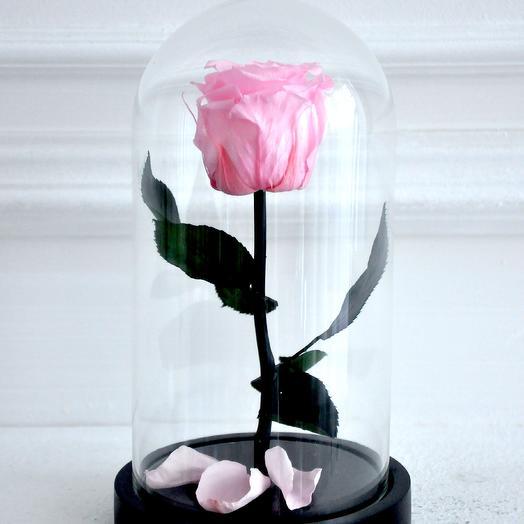 Роза в колбе мини Розовая нежность