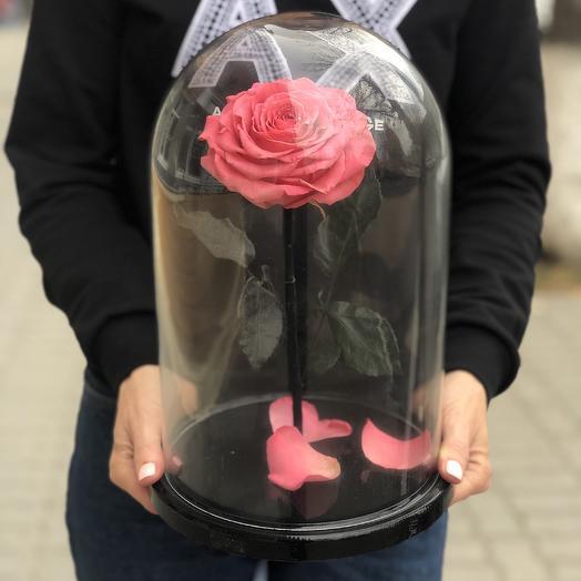 Роза Премиум: букеты цветов на заказ Flowwow
