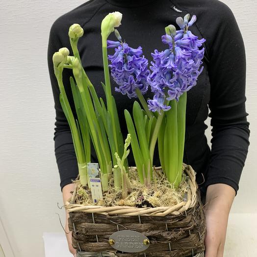 Ты- редкость: букеты цветов на заказ Flowwow