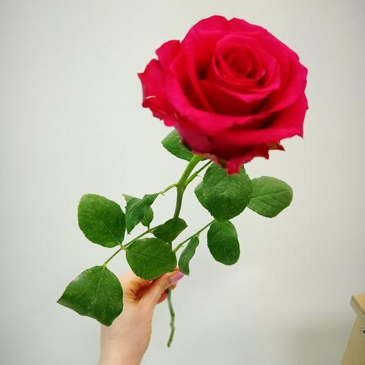 Малиновая ожурная роза