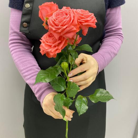Роза кустовая Фиеста