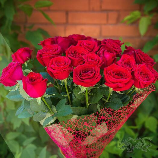 Элитная красная роза 11 шт