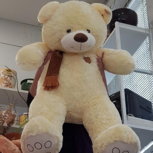 Медведь 24.4🦋
