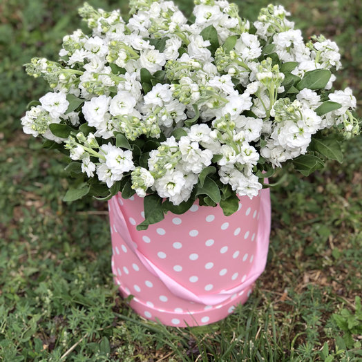 Нежная маттиола : букеты цветов на заказ Flowwow