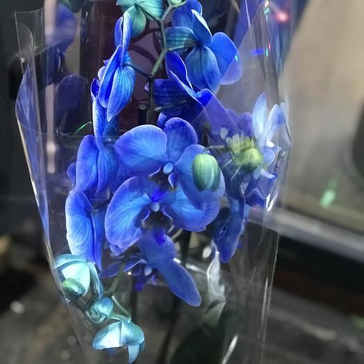 Орхидея Королевская: букеты цветов на заказ Flowwow