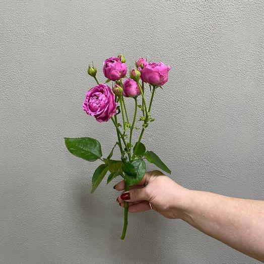 Кустовая Роза Баблз