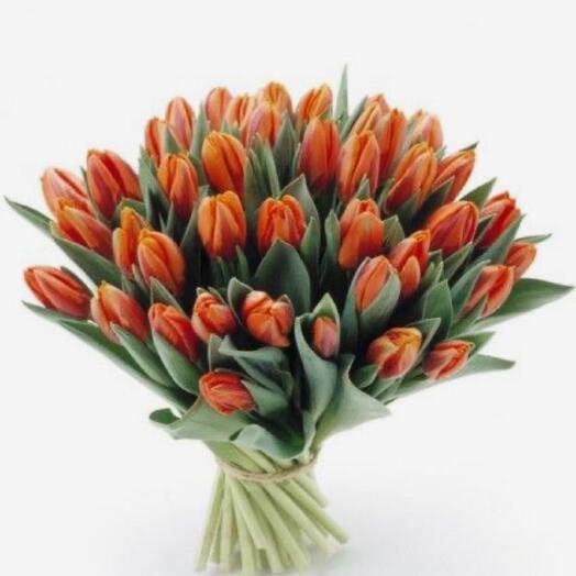 Моно из 50 пионовидных тюльпанов