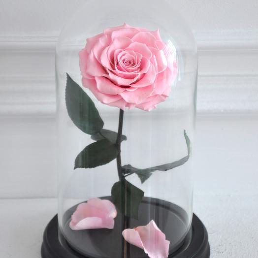 PINK INNOCENCE, РОЗОВАЯ РОЗА В КОЛБЕ PREMIUM: букеты цветов на заказ Flowwow