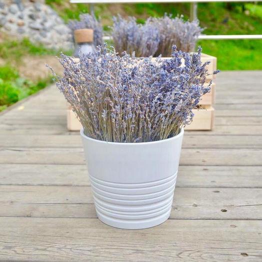 Лаванда в белом фаянсовом горшочке: букеты цветов на заказ Flowwow