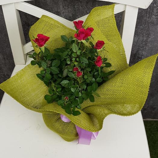 Завтрак в Париже: букеты цветов на заказ Flowwow