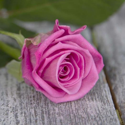 Роза Россия Аква